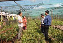 vườn cung cấp giống cây trồng buôn ma thuột